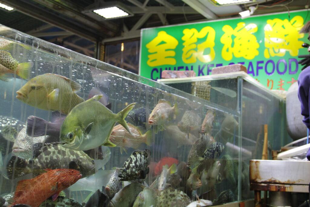 Fish Hong Kong