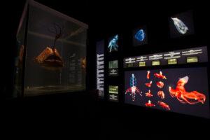 ASM The Deep Exhibition 030615-4