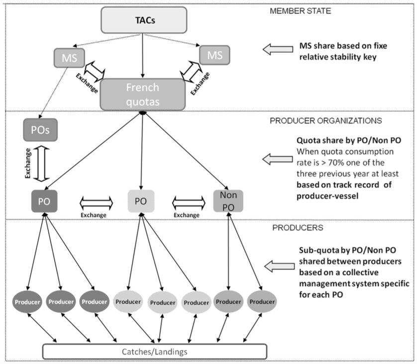 Current organisation of the quotas management system in France in Larabi et al (2013)