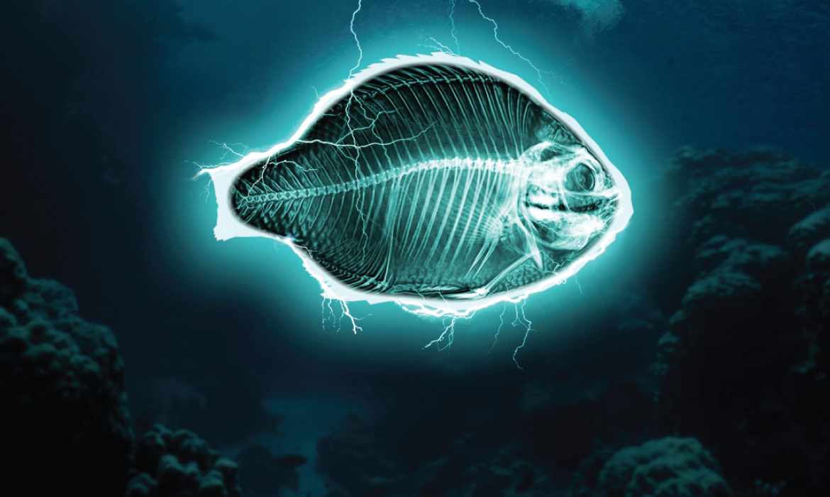 ELECTRIC FISHING: TOWARDS A FULL BAN IN EUROPE