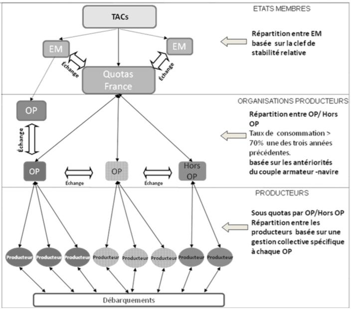 Organisation actuelle du système de gestion des quotas en France (Source: Larabi et al. 2013) TAC: Totaux Autorisés de Capture (par espèce et région de pêche européenne) EM: Etat Membres OP: Organisation de Producteur
